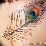 фото тату перо павлина от 26.06.2018 №024 - tattoo peacock feather - tatufoto.com