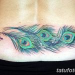 фото тату перо павлина от 26.06.2018 №056 - tattoo peacock feather - tatufoto.com