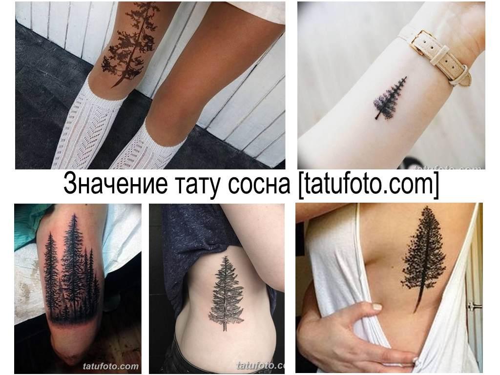Значение тату сосна - коллекция готовых рисунков татуировки на фото