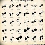 Эскизы тату кошачьи следы от 31.07.2018 №005 - Sketches tattoo cat tracks - tatufoto.com