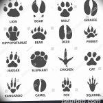 Эскизы тату кошачьи следы от 31.07.2018 №025 - Sketches tattoo cat tracks - tatufoto.com