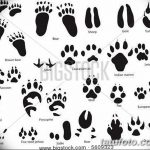 Эскизы тату кошачьи следы от 31.07.2018 №028 - Sketches tattoo cat tracks - tatufoto.com