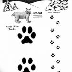 Эскизы тату кошачьи следы от 31.07.2018 №046 - Sketches tattoo cat tracks - tatufoto.com