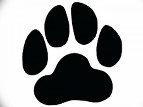 Эскизы тату кошачьи следы от 31.07.2018 №062 - Sketches tattoo cat tracks - tatufoto.com
