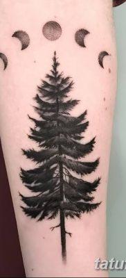 фото тату сосна от 31.07.2018 №001 – tattoo pine – tatufoto.com