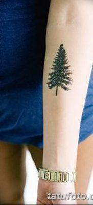 фото тату сосна от 31.07.2018 №004 – tattoo pine – tatufoto.com