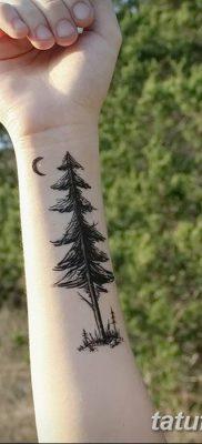 фото тату сосна от 31.07.2018 №010 – tattoo pine – tatufoto.com