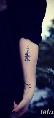 фото тату сосна от 31.07.2018 №015 – tattoo pine – tatufoto.com