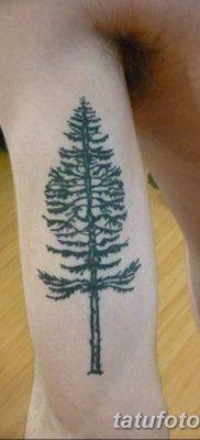 фото тату сосна от 31.07.2018 №080 – tattoo pine – tatufoto.com