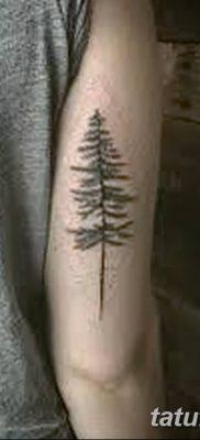 фото тату сосна от 31.07.2018 №090 – tattoo pine – tatufoto.com