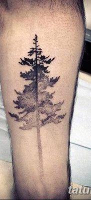 фото тату сосна от 31.07.2018 №093 – tattoo pine – tatufoto.com