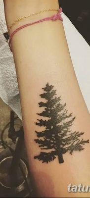 фото тату сосна от 31.07.2018 №099 – tattoo pine – tatufoto.com