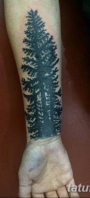 фото тату сосна от 31.07.2018 №117 – tattoo pine – tatufoto.com