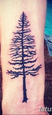фото тату сосна от 31.07.2018 №119 – tattoo pine – tatufoto.com