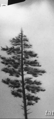 фото тату сосна от 31.07.2018 №121 – tattoo pine – tatufoto.com