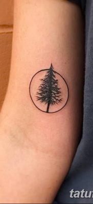 фото тату сосна от 31.07.2018 №123 – tattoo pine – tatufoto.com