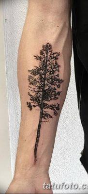 фото тату сосна от 31.07.2018 №124 – tattoo pine – tatufoto.com
