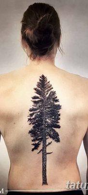 фото тату сосна от 31.07.2018 №125 – tattoo pine – tatufoto.com