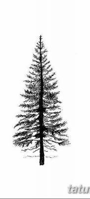 фото тату сосна от 31.07.2018 №126 – tattoo pine – tatufoto.com