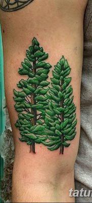 фото тату сосна от 31.07.2018 №127 – tattoo pine – tatufoto.com