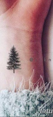фото тату сосна от 31.07.2018 №135 – tattoo pine – tatufoto.com