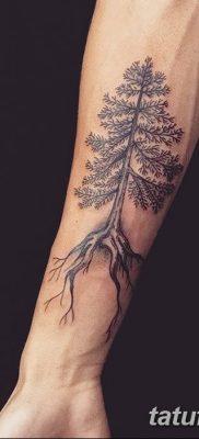 фото тату сосна от 31.07.2018 №136 – tattoo pine – tatufoto.com
