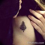 фото тату сосна от 31.07.2018 №138 - tattoo pine - tatufoto.com