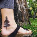 фото тату сосна от 31.07.2018 №139 - tattoo pine - tatufoto.com