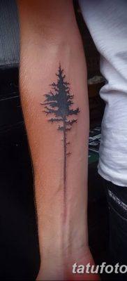 фото тату сосна от 31.07.2018 №146 – tattoo pine – tatufoto.com