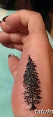 фото тату сосна от 31.07.2018 №151 – tattoo pine – tatufoto.com