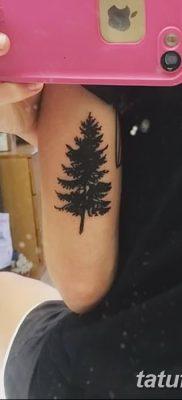 фото тату сосна от 31.07.2018 №153 – tattoo pine – tatufoto.com