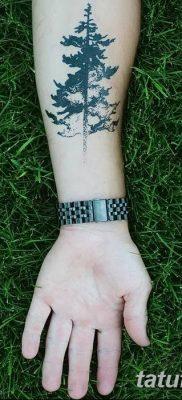 фото тату сосна от 31.07.2018 №158 – tattoo pine – tatufoto.com