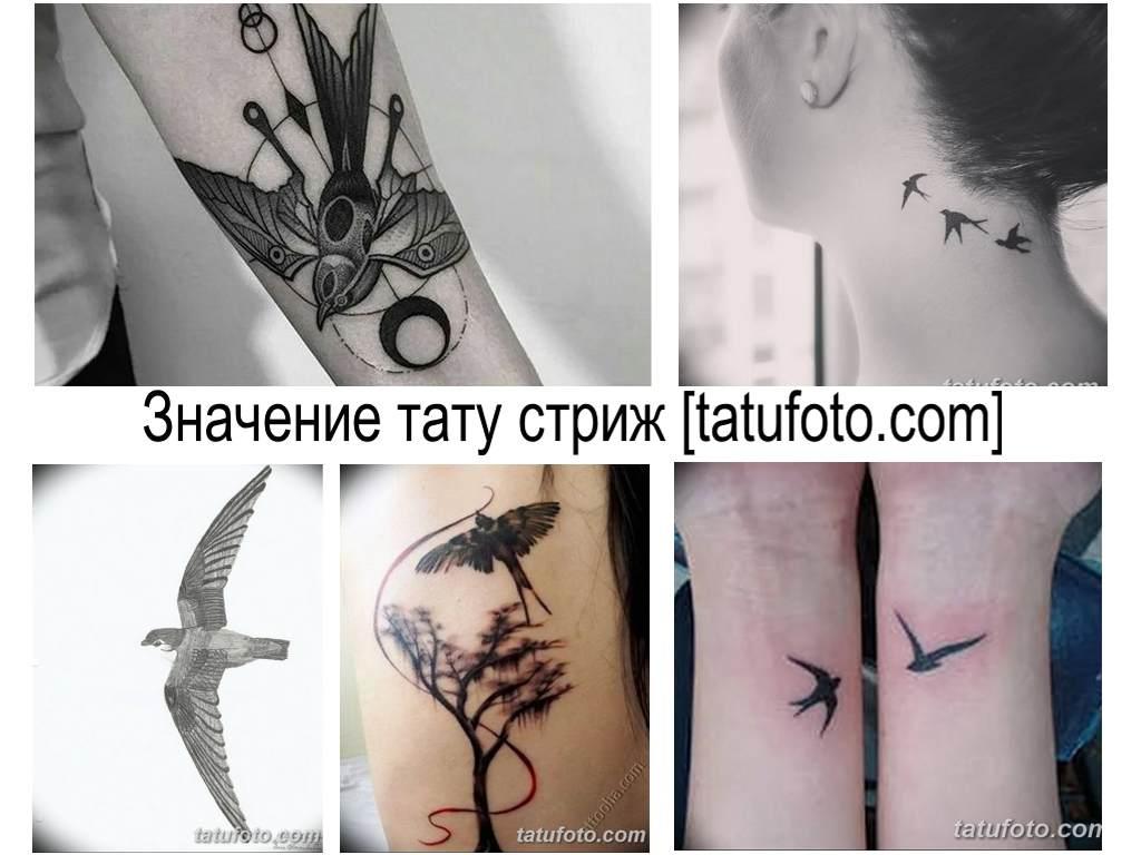 Значение тату стриж - фото примеры рисунков татуировки