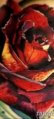 Фото тату красная роза от 08.08.2018 №105 – red rose tattoo – tatufoto.com
