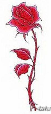 Фото тату красная роза от 08.08.2018 №159 – red rose tattoo – tatufoto.com