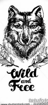 Фото тату волк и перо от 21.09.2018 №002 – tattoo wolf and feather – tatufoto.com