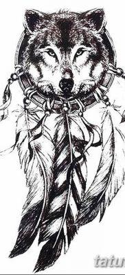 Фото тату волк и перо от 21.09.2018 №012 – tattoo wolf and feather – tatufoto.com