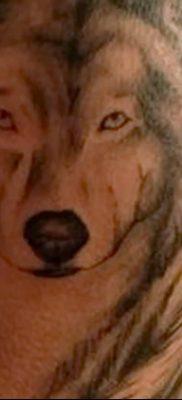Фото тату волк и перо от 21.09.2018 №016 – tattoo wolf and feather – tatufoto.com