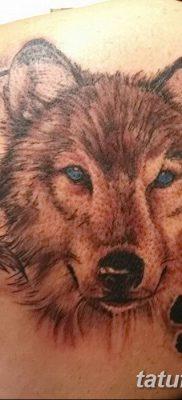 Фото тату волк и перо от 21.09.2018 №025 – tattoo wolf and feather – tatufoto.com
