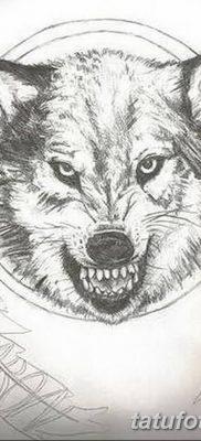 Фото тату волк и перо от 21.09.2018 №074 – tattoo wolf and feather – tatufoto.com