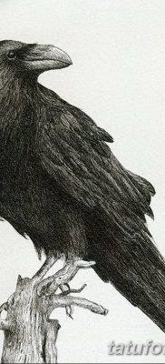 Фото тату ворон от 15.09.2018 №187 – raven tattoos – tatufoto.com