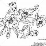 Фото эскизы тату камелия от 18.09.2018 №009 - sketches of camellia tattoos - tatufoto.com