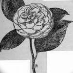 Фото эскизы тату камелия от 18.09.2018 №026 - sketches of camellia tattoos - tatufoto.com