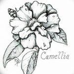 Фото эскизы тату камелия от 18.09.2018 №036 - sketches of camellia tattoos - tatufoto.com