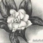 Фото эскизы тату камелия от 18.09.2018 №044 - sketches of camellia tattoos - tatufoto.com
