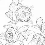 Фото эскизы тату камелия от 18.09.2018 №054 - sketches of camellia tattoos - tatufoto.com