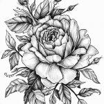 Фото эскизы тату камелия от 18.09.2018 №072 - sketches of camellia tattoos - tatufoto.com