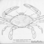 Animal - curiosity - black and white - crab