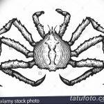 Фото эскизы тату краб рак от 11.09.2018 №078 - sketching tattoo crab cancer - tatufoto.com