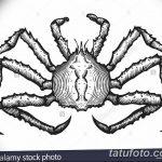 Фото эскизы тату краб рак от 11.09.2018 №080 - sketching tattoo crab cancer - tatufoto.com